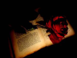 обои Красная роза на книге фото
