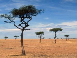 обои Жаркие пустыни фото