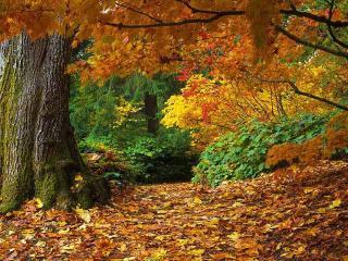 обои Осенняя роща фото