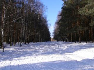 обои Сказочно красивый русский лес фото