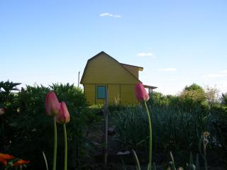 обои Тюльпаны у желтого домика фото