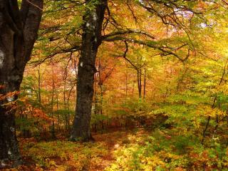 обои Осень,   в лесу. фото