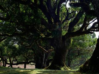 обои Древний парк фото