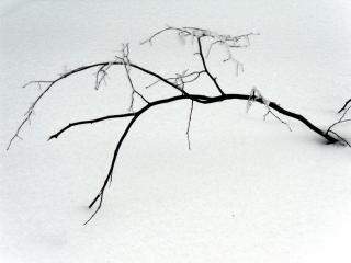 обои Голая ветвь на снегу фото