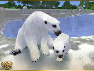 обои Zoo Tycoon 2 Polar Bear фото