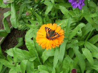 обои Бабочка на цветке фото