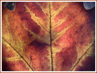 обои Осенний опавший дубовый лист фото