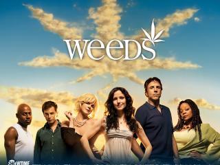 обои Weeds (TV Series),   2005 фото