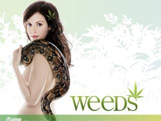 обои Weeds (Showtime Networks TV Series) фото