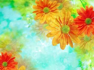обои Река цветов фото