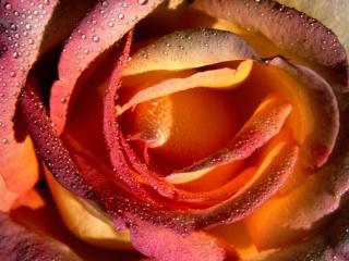 обои Внутри цветка фото
