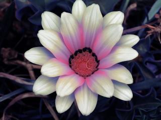 обои Необычный цветок фото
