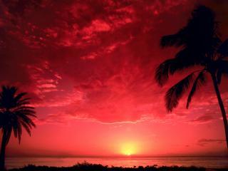 обои Пальмы и закат фото