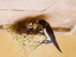 обои Ласточкино гнездо фото