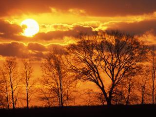 обои Закат деревья фото