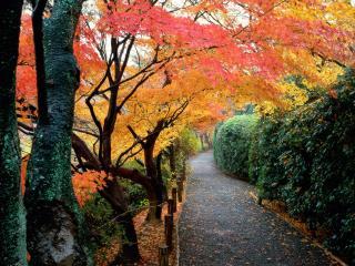 обои Осенние цвета в Киото фото