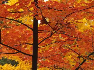 обои Взгляд на осень изнутри фото