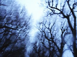 обои Голубоватые деревья фото