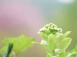 обои Свежие зеленые растения фото