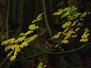 обои Желтые листья в лесу фото