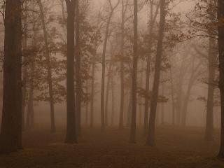 обои Загадочный лес фото