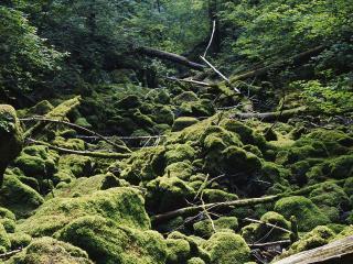 обои Заросший лес фото