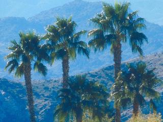 обои Зеленые пальмы фото