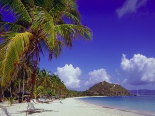 обои Летний пляж с пальмами фото