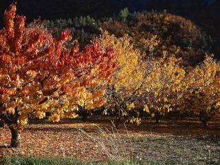обои Осень в  ночном парке фото