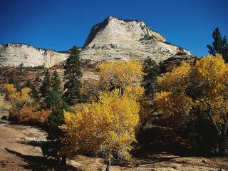 обои Золотые кустарники в горах фото