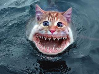 обои Зубастый котик фото