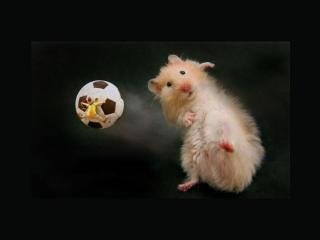 обои Мышка футболистка фото