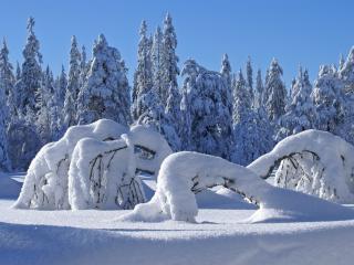 обои Лес покрытый снегом фото