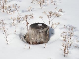 обои Пень в снегу фото