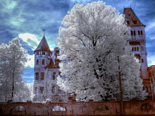 обои Снежное дерево HDR фото