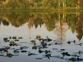 обои Кувшинки на озере фото