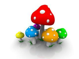обои Цветные грибы фото