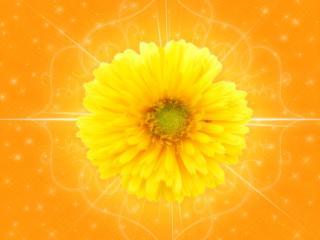 обои Ярко-жёлтый цветок фото