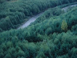 обои Лесная река фото