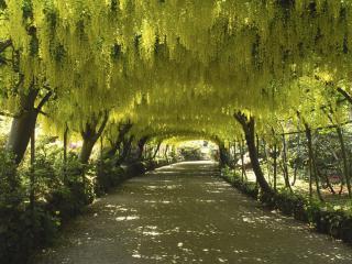 обои Аллея под цветущими деревьями фото