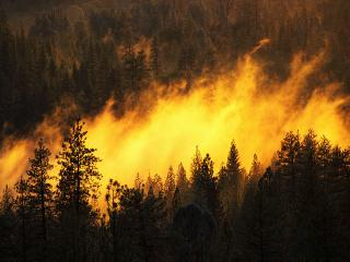 обои Лесной пожар фото