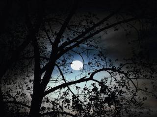 обои Полная луна фото