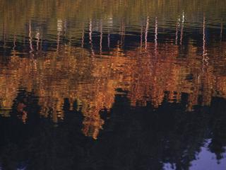 обои Осеннее озеро фото