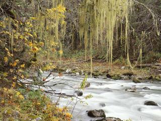 обои Осенний ручей, под свисающими ветвями деревьев фото