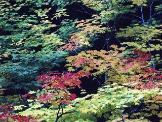 обои для рабочего стола: Разноцветные листья