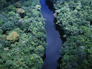 обои Река в лесу фото