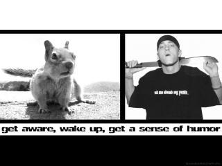 обои eminem squirrel фото