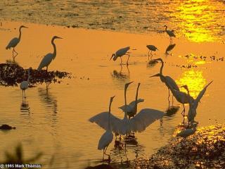 обои Птици на водоеме фото
