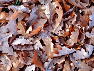 обои Сухие листья на земле фото