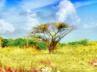 обои Красочная природа и дерево, осень фото